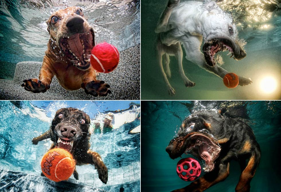 Underwater dogs by Seth Casteel 1