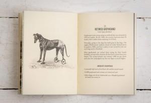 east-london-wildlife3-LumberJac-Lumberjack