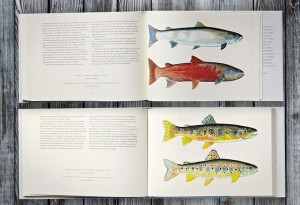 Trout-of-the-World2-LumberJac