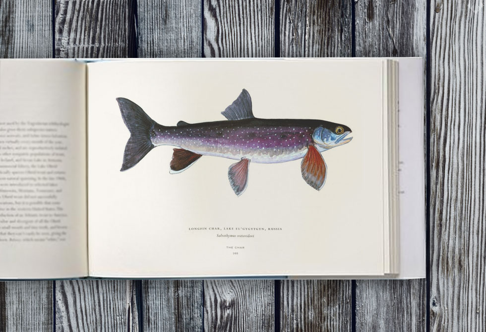 Trout-of-the-World3-LumberJac