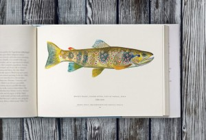 Trout-of-the-World4-LumberJac