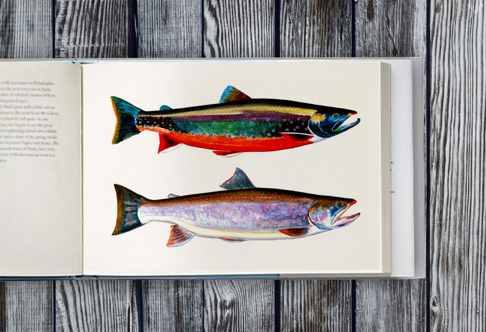 Trout-of-the-World5-LumberJac