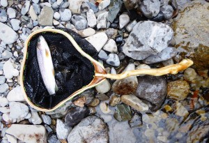 Smallfish-Fly-Fishing-Nets-3-LumberJac