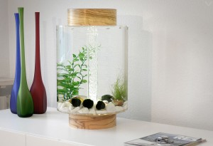 Norrow Aquarium